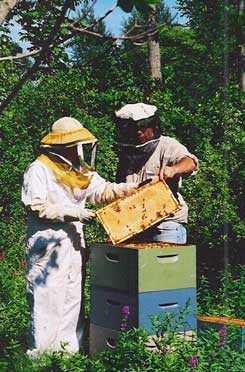 Taking care of the honey bees
